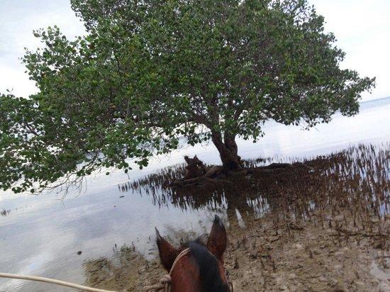 The Menjangan: 乗馬で海へ♪