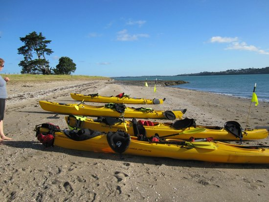 Auckland Sea Kayaks : on shore for a hike around the otherwise deserted island - so peaceful!