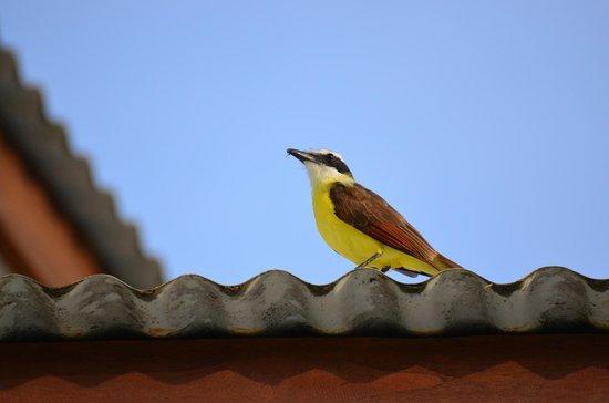 Blue Osa Yoga Retreat and Spa : Birds around Blue Osa