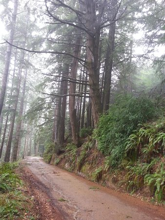Sinkyone Wilderness State Park : The road to the Lost Coast