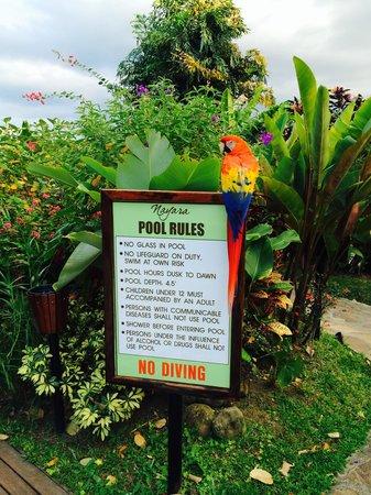Nayara Resort Spa & Gardens: Carolota showing off at the pool