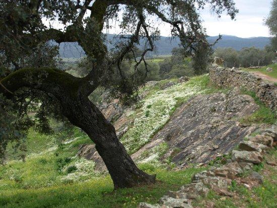 Casas Rurales el Rincon de las Tobas: Sendero-Paseo  próximo a las casas rurales