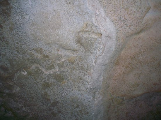 Smallin Civil War Cave: We had never heard of giant worms, but here was the fossil evidence.