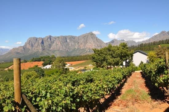 Clouds Wine & Guest Estate: prachtig zicht op de bergen en Clouds wijnen