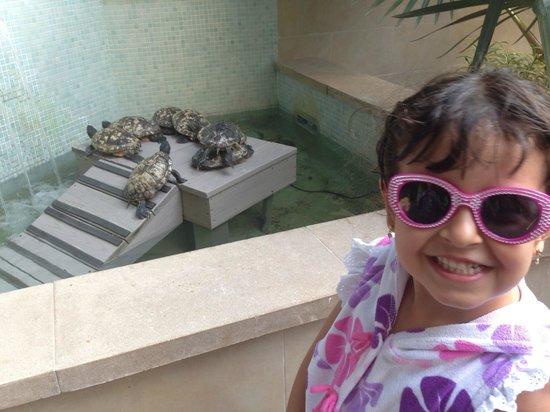 Hyatt Centric Key West Resort and Spa : tartarugas
