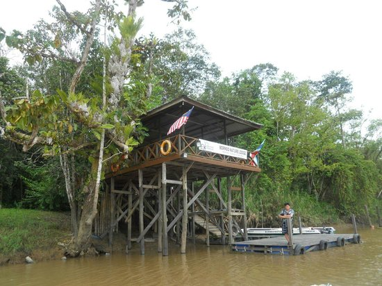 Borneo Nature Lodge: The jetty seen from the river