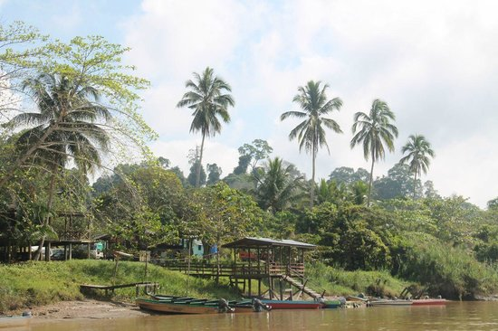 Borneo Nature Lodge : View from the river of Sukau
