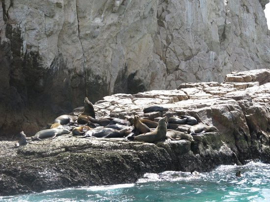 Aqua Activities Los Cabos: Sea Lion Colony -Lands End