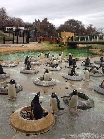 Edinburgh Zoo: Penguin rock