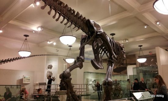 American Museum of Natural History : museo