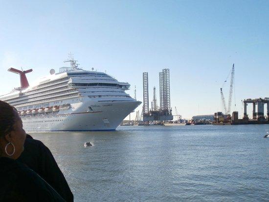 Port of Galveston: Dolphin ways Bon Voyage to cuise ship