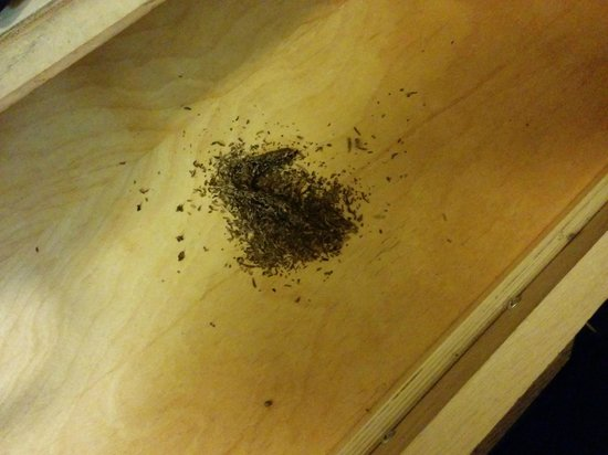 Knights Inn & Suites Yuma: Emptied Cigar Filling in Top Drawer