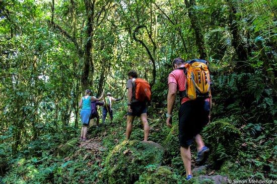 Nkuringo Bwindi Gorilla Lodge: Bwindi Impenetrable Forest