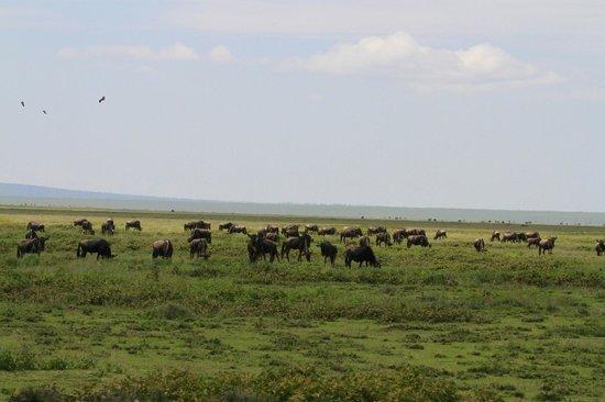 Ubuntu Camp, Asilia Africa: Die Weite der Serengeti