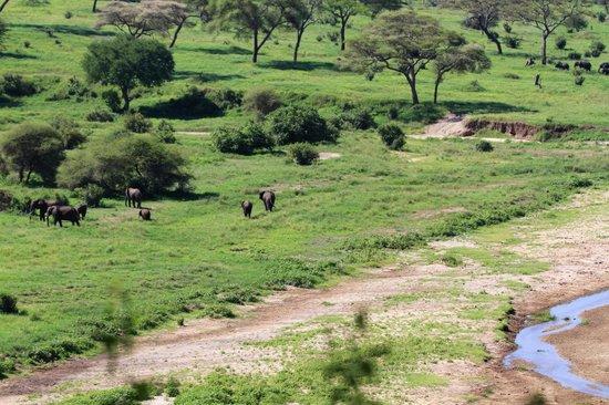 Tarangire River Camp : Elefanten