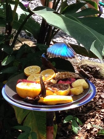 Butterfly Haven : Butterflies feasting on sugar.