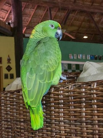 Iberostar Cozumel: Paco in the Lobby