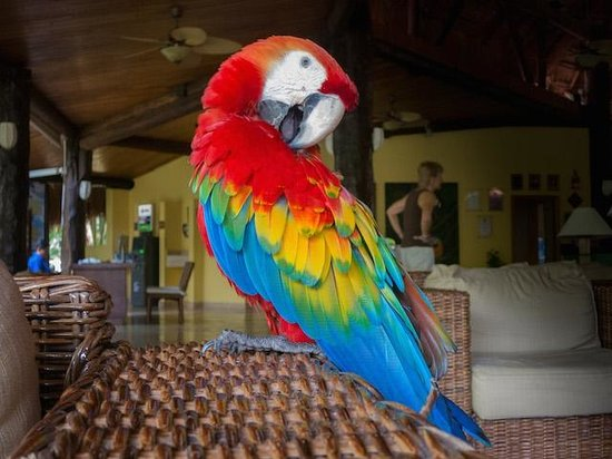 Iberostar Cozumel: Another parrot in the Lobby