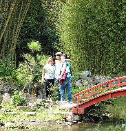 Bridge in jap section picture of jardin botanico for Jardin lankester