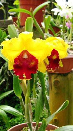 Jardin Botanico Lankester: Orchids