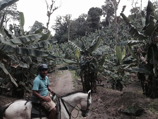 Arenal Wilberth Stables: Enrique at the plantation.