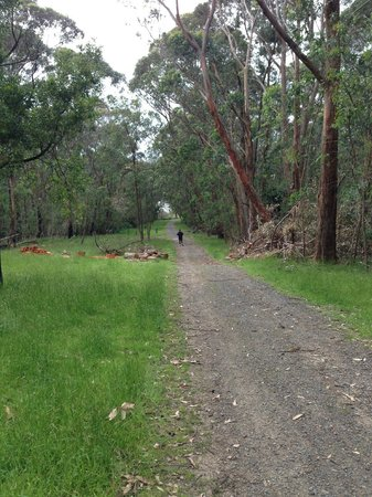 Trailmix Cafe: Trails and bushland around Lysterfield Lake parklands.