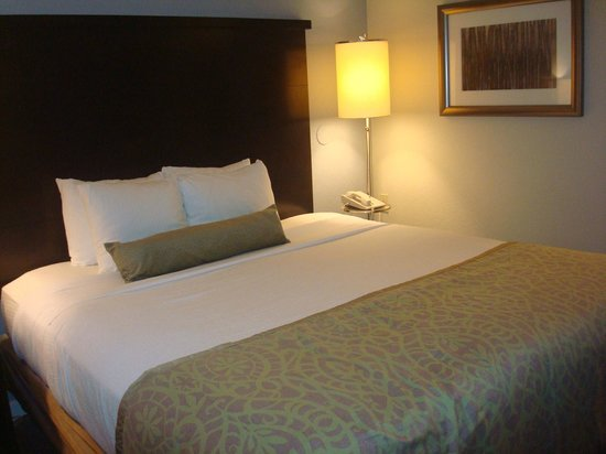 Staybridge Suites Lake Buena Vista : Habitación Cama King
