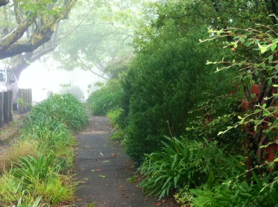 Greens of Leura: Greeneries surrounds the area