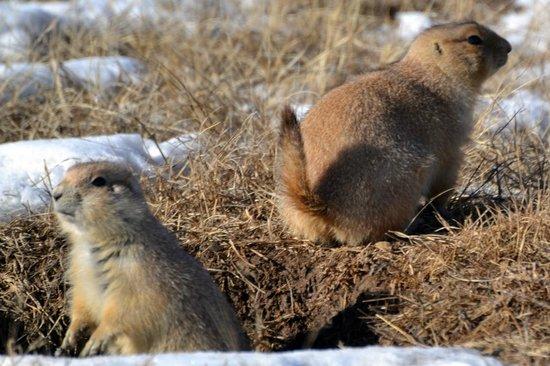 Devils Tower National Monument: Praerie dogs