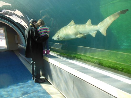 Pittsburgh Zoo & PPG Aquarium: up close with the sharks