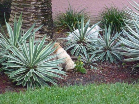 Inn at Cocoa Beach: In house doggies