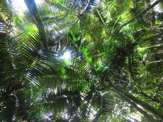 El Yunque Tours: The Beautiful Canopy