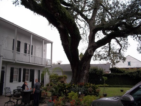 Ashton's Bed and Breakfast: Beautiful live oak