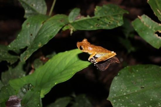 Yoi EcoLodge : frog
