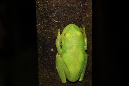 Yoi EcoLodge : glow in the dark frog