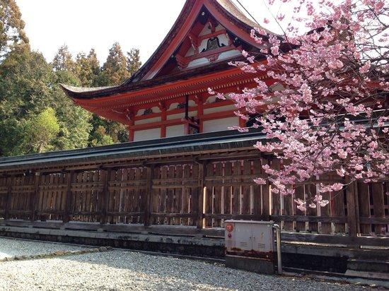 Tosa Shrine: 本殿の横より