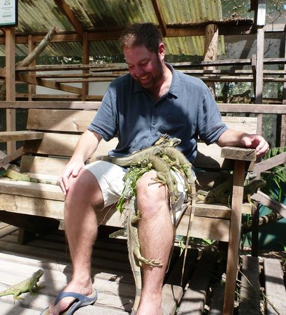 Green Iguana Conservation Project : Got Leaves?