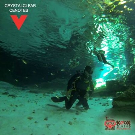 Koox Diving : natural beauty cenotes dive snorkel...