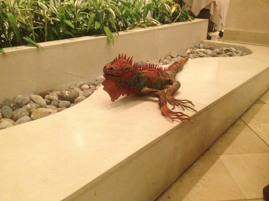 ‪هوتل أورو فيردي جواياكيل: Art iguana in foyer‬