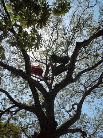 Upventures - Day Tours treetop tents & treetop tents - Picture of Upventures - Day Tours Jaco - TripAdvisor
