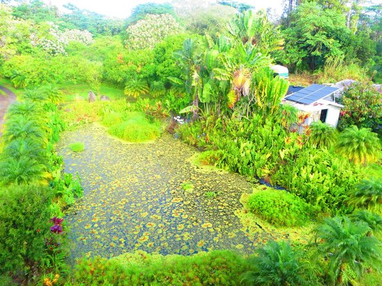 Pele's Breath: Pond in front of Inn