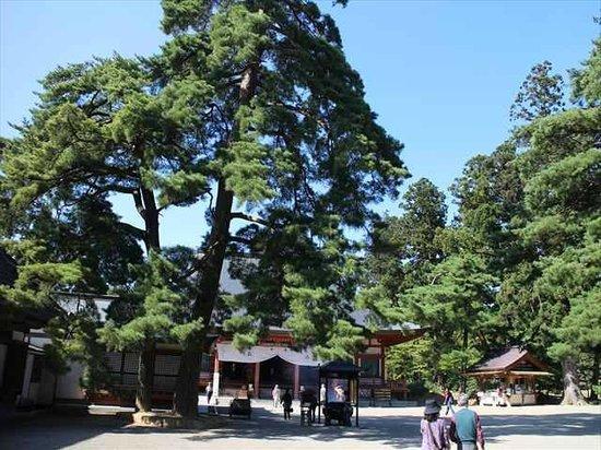 Motsu-ji Temple: 毛越寺4