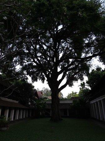 Tamarind Village: The Tamarind Tree