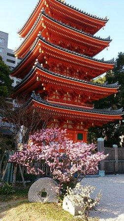 Tochoji Temple: Pagoda with the pretty cherry blossom.