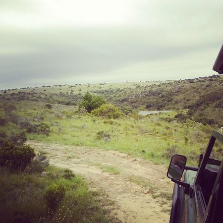 Kwantu Private Game Reserve - Day Visits: game drive tracking elephants