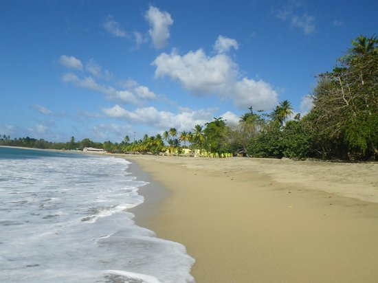 Turtle Beach by Rex Resorts : Beach