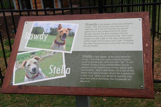 Hyatt Regency Hill Country Resort and Spa: Rowdy & Stella