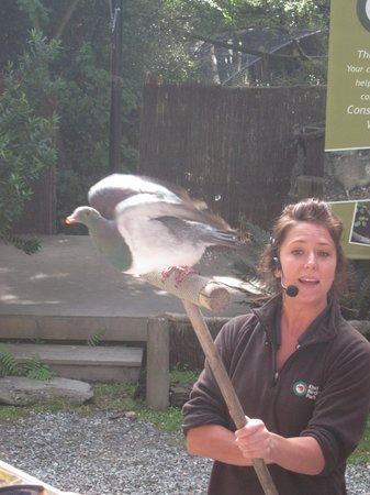 Kiwi Birdlife Park: Live birds flew so close over our heads it made people jump - but amazing!