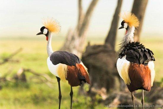 Rekero Camp, Asilia Africa: More beautiful birds - crawn chord!!