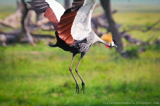 Rekero Camp, Asilia Africa: The birds next to Governors region